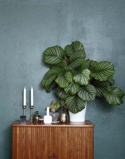4 Easy Indoor Houseplants